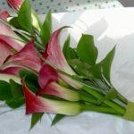 floristeria-maria-luisa-ramos